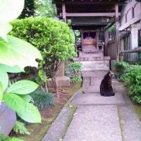 白山神社のにゃんこ