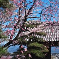 菅の台 其の2( 最終) (2017年04月25日 火 晴 EOS5DⅢ)