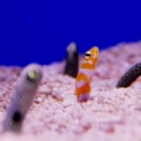 海水情報&オーダーレイアウト