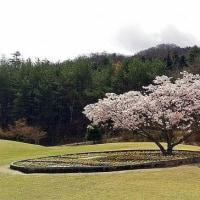 4月21日(金) 日々の風景