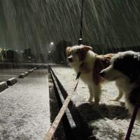 雪?それとも雨?