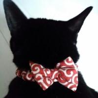 おリボン妹猫