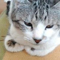 (土) 猫ちゃんと暮らすしあわせ