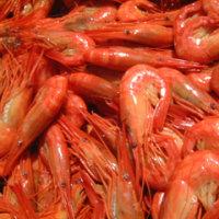 ◆独特の漁法・打瀬舟による秋の北海シマエビ漁がひがし北海道の野付湾で・・