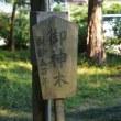 栃木県鹿沼市、磯山神社の杉(二本)です!!