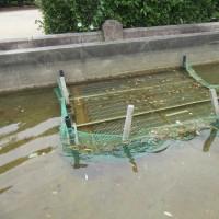噴水塔周り池での作業は何があるでしょう、落ち葉とり。正解!