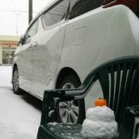 伊良湖に初雪