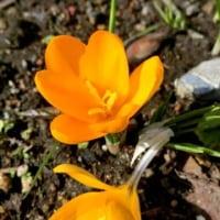 薔薇。庭の小さな花