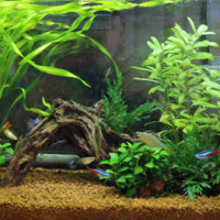 熱帯魚を飼う。-その3 水槽半年経過-