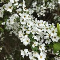 野生のエビネ蘭の花芽が‼️