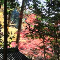 書写山の紅葉