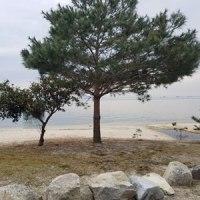 湖岸のウオーキング