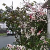 一本の木に色とりどりの花