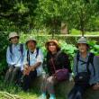 水元公園の蓮(2017-07-10)