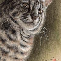 Wild Cat Ⅰ