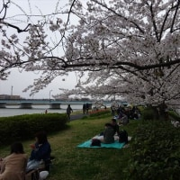 No.1.212 「夜桜」のお話。