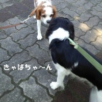 嬉し楽し公園散歩(*^_^*)