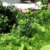 5.14庭 緑と花いっぱい
