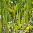 世羅自然観察園でトンボに出会う