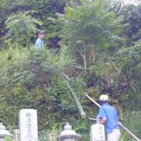今季の竹の子征伐は、これで終了に。②