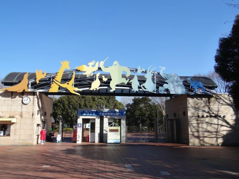 千葉市動物公園~イケメンゴリラ