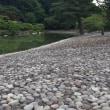 大宮御所のネコと仙洞御所の洲浜の石