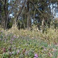 春の農道脇に五つの花