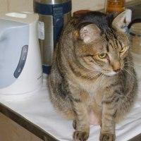 猫の残り物を食べる