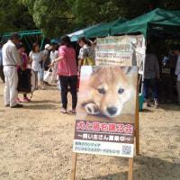 6/11(日)浜松城公園のアース・エコ・フェアと犬猫譲渡会