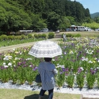 6月18日(日曜日)「菖蒲園」その3 (Ka-Koさん)