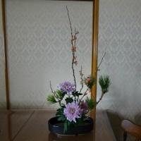 お正月のお花 ボケの花(バラ科)菊 松です