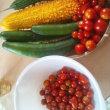 本日の家庭菜園収穫