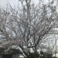 2017/4/10頃の庭の様子