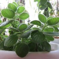 出窓で時期を待つ植物
