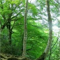 氷ノ山【須賀ノ山)標高1509M。   17・5月20日