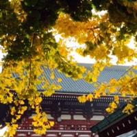 浅草寺の紅葉