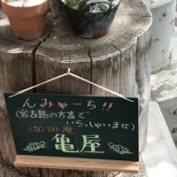 但東暮らし 145〜お店やさんごっこ(こらこら)と多肉植物〜
