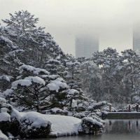 雪の縮景園 170115