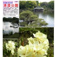 花巡り 「石楠花-4」 清澄公園