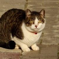 近所の鈴猫、再び