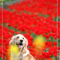 花を愛でるワンコ