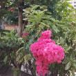 真夏の花ーサルスベリ
