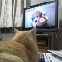 テレビ観戦中