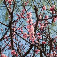 羽生市郊外の春の彩り(埼玉)