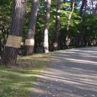 香雪園のお散歩日記