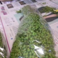 実山椒の季節になりました!