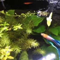 熱帯魚と水草の世話を