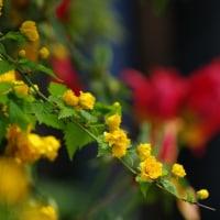 濃縮された 「里山の春」