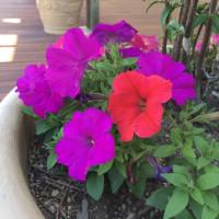 ドルフィンポートのお花たち