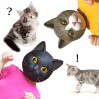 「にゃんにゃんにゃん」で2月22日はネコの日!